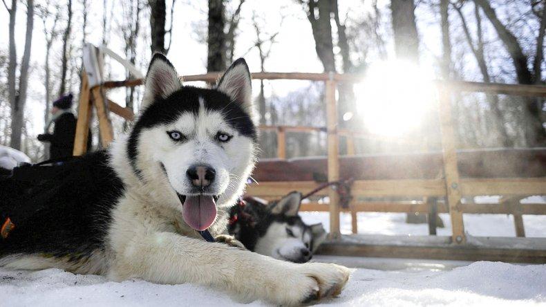 Valle de Lobos nació como criadero de perros de trineo