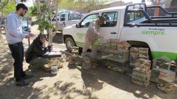 trafico de aves en la patagonia, una actividad que crece y mueve mucho dinero