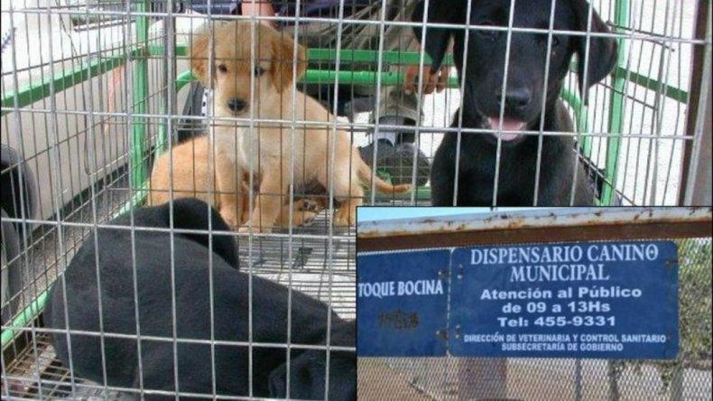 La perrera volverá a la calle con custodia de la Secretaría de Seguridad