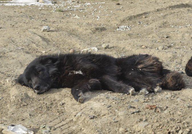 El perro que mordió a Milagros no pudo ser capturado ayer por el personal municipal y continúa suelto en la calle.