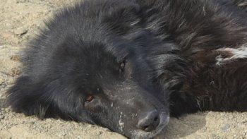 Finalmente, el perro que atacó a Milagros pudo ser capturado. Ahora se analizará si tiene rabia y podría terminar en adopción.