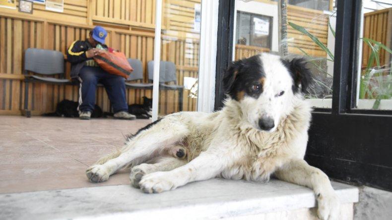 Perros callejeros en la casa de las leyes