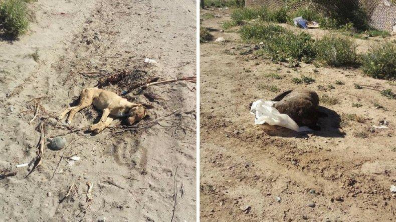 En dos días envenenaron a ocho perros