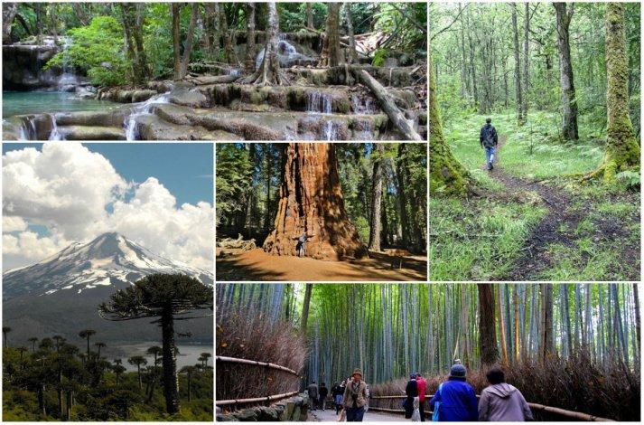 Top 5: Los bosques mas bellos