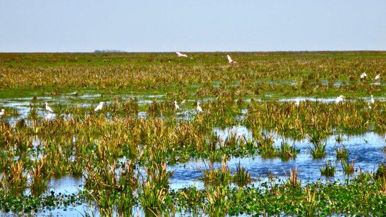 CLT (The Conservation Land Trust) donó las tierras del parque creado con el objetivo de conservar la flora y fauna nativa de los Esteros del Iberá.
