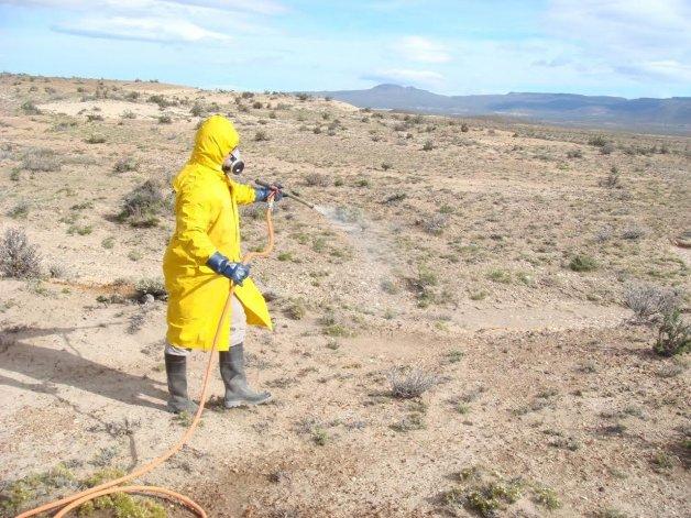 Trabajan en el control de la tucura que invade los campos de la provincia