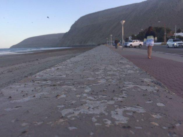 Invasión de moscas en la costanera: a qué se debe