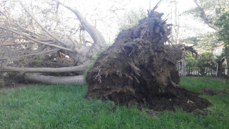 Las consecuencias del temporal de viento.