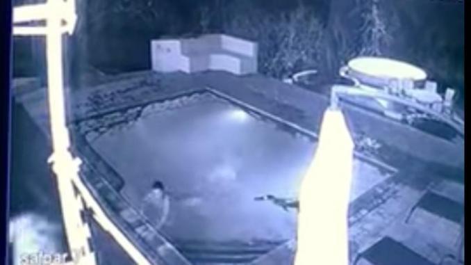 Cocodrilo ataca a una pareja en la piscina