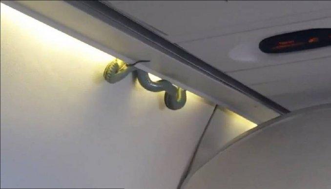 Una víbora de un metro y medio apareció dentro de un avión