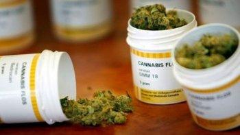 el uso medicinal del cannabis ya rige en argentina