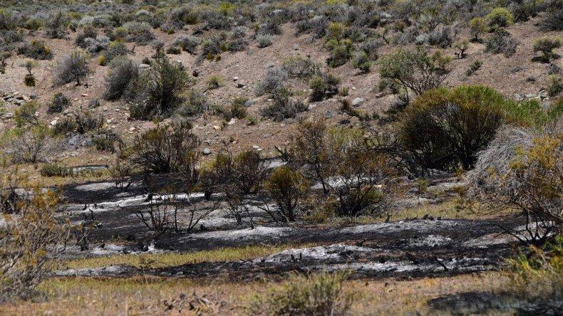 Los manchones negros que se ven en el suelo son las tucura.