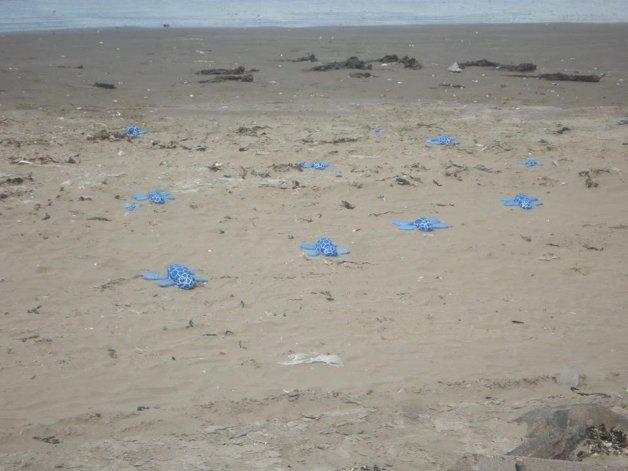 Aparecieron tortugas azules en la playa de Rada Tilly