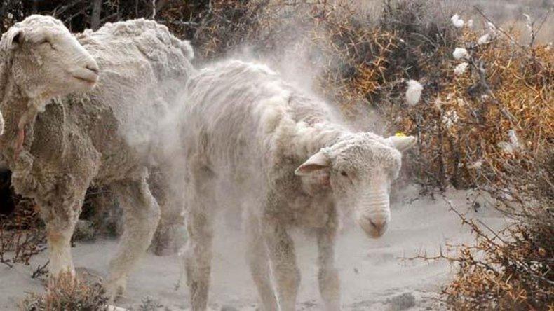 Eximen de deudas a productores ovinos de Chubut y Río Negro