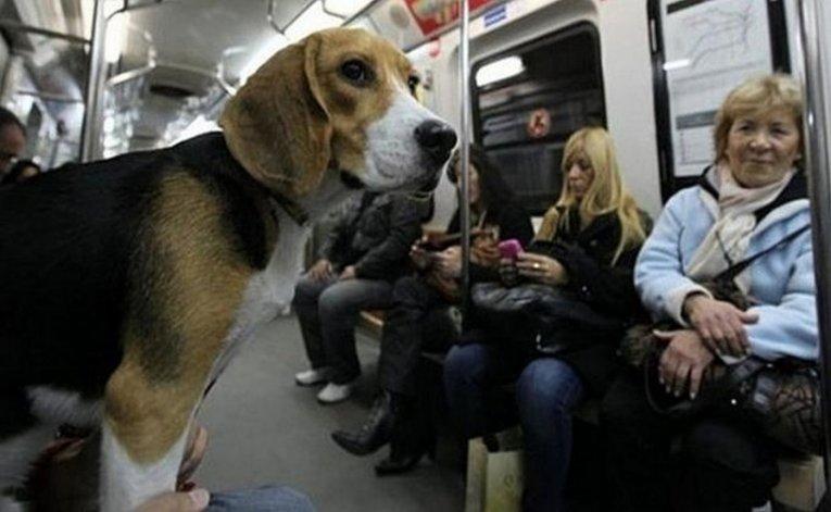 Los usuarios del subte ya podrán viajar con sus mascotas