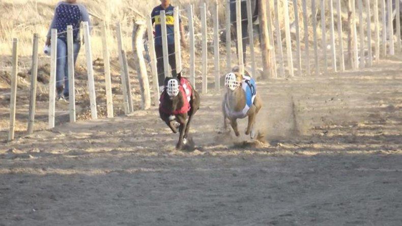 Algo más de 70 galgos compiten en las carreras que se realizan una vez al mes en Sarmiento.