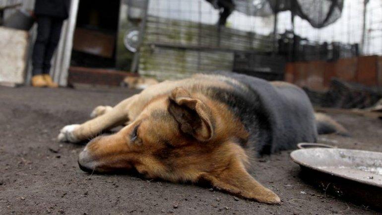 Más de 50 perros y gatos fueron envenenados con herbicida