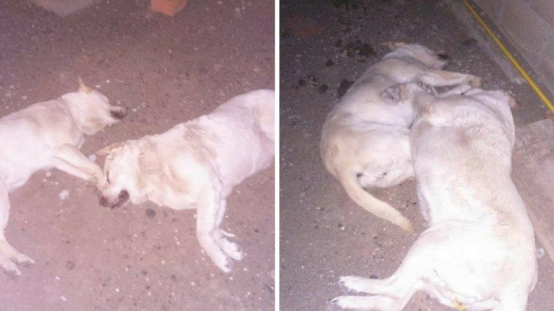 Vecinos de Zona Norte denuncian envenenamiento de mascotas