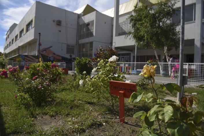 El acceso a la Escuela de Arte es cuidado por los alumnos de primer año que se ocupan de las 50 rosas que plantaron.