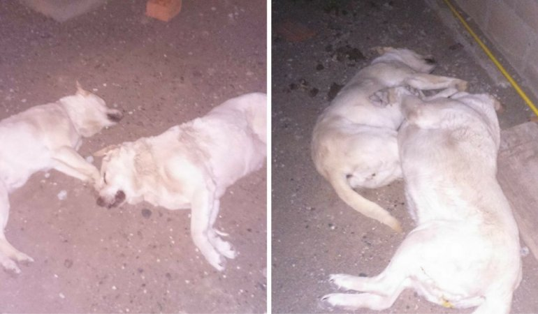 Preocupación en barrio Gobernador Fontana por perros envenenados