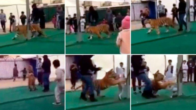 Un tigre atacó a una nena en un mercado de Arabia