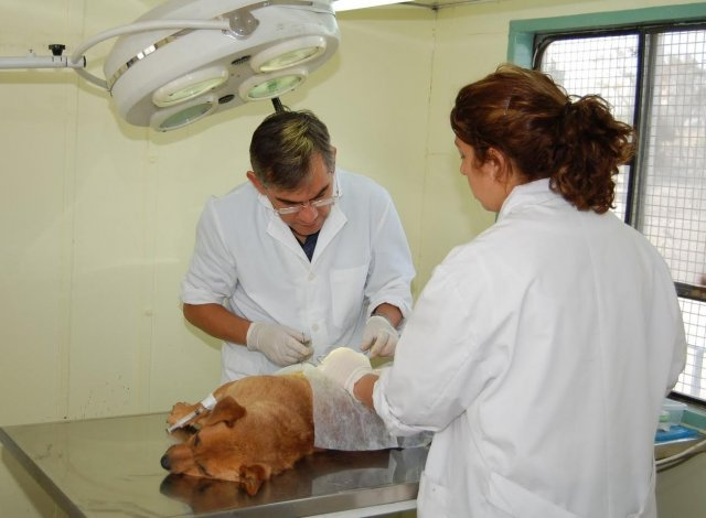 Nueva jornada de castración canina y felina