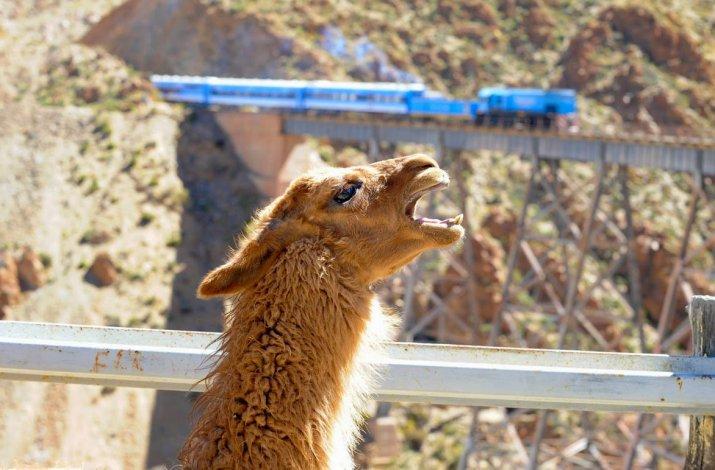 En el recorrido vigente se combinan trayectos terrestres y ferroviarios buscando beneficiar el desarrollo local y turístico de la Puna salteña.