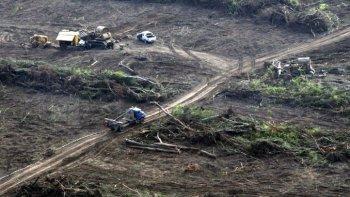 deforestacion: en 7 anos se perdio una superficie equivalente a jujuy
