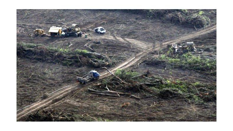Deforestación: en 7 años se perdió una superficie equivalente a Jujuy