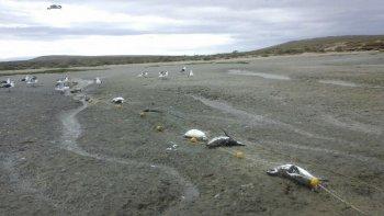 masacre de pingüinos en puerto san julian