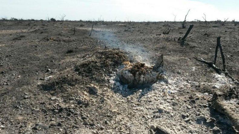 El incendio al norte de Puerto Madryn está controlado