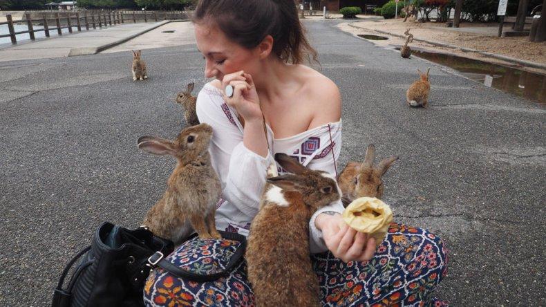 Los conejos de la isla conviven con los seres humanos y se acercan en masa a los visitantes buscando algo de comer.