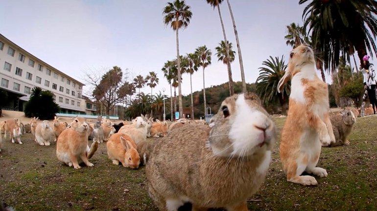 Algunos aseguran que la cantidad de conejos que habita la isla ronda los 300.