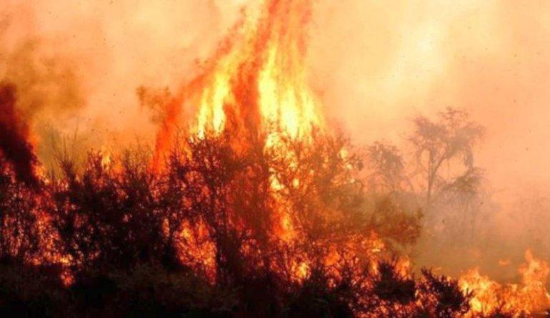 Incendios arrasaron más de 600 mil hectáreas en el país