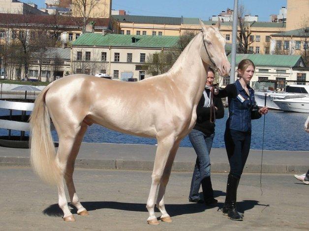 El caballo más lindo del mundo