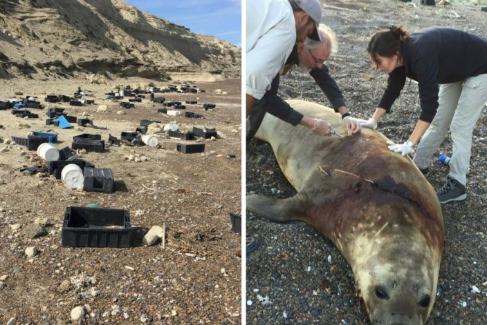 Multarán a pesqueras por descarte de cajones