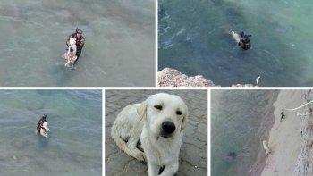 rescataron a dos perros atrapados por la marea