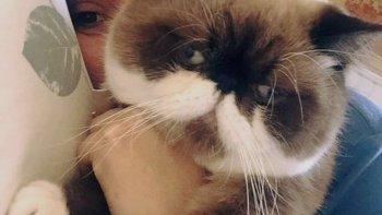 su gato se perdio en un vuelco y ofrece $30.000 de recompensa