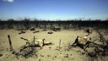 Los incendios de campos que afectaron en las últimas semanas a La Pampa, Río Negro y otras provincias.
