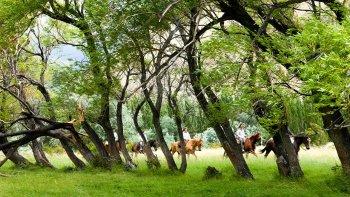 En Esquel hay una gran variedad de recorridos que se pueden realizar a caballo.