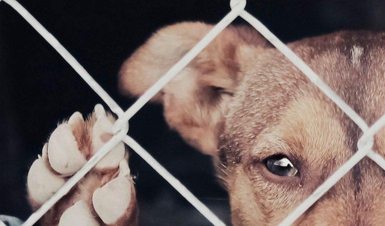 Marcharán para pedir sanciones más duras por maltrato a animales