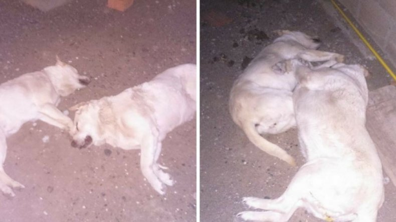 Preocupación en Km 3 por el envenenamiento de perros