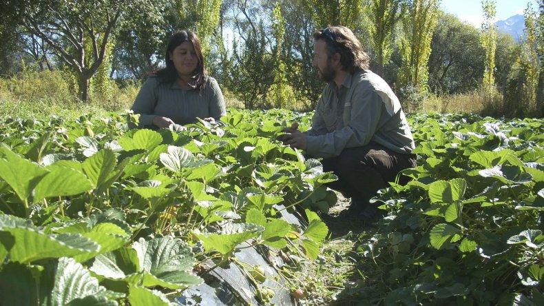 En esta temporada bajó el número de cosecheros que venían de otros puntos del país.