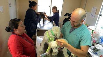 La sobrepoblación canina es una gran problemática, dijo el vecinalista Marcelo Curallán.