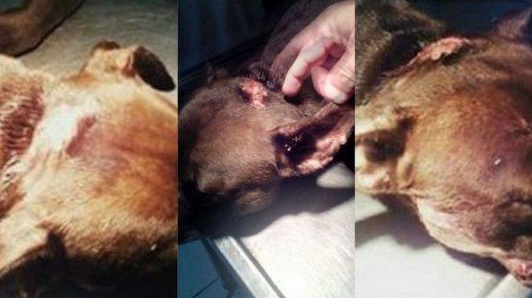 Atacaron a una perra a machetazos
