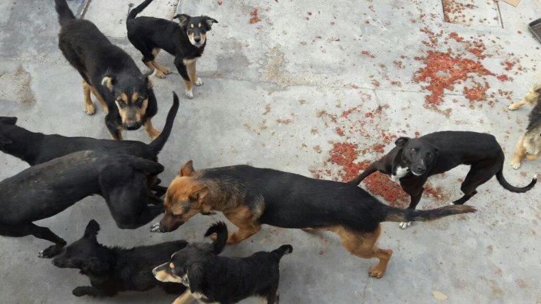 Polémica en Sarmiento entre la  perrera municipal y proteccionistas