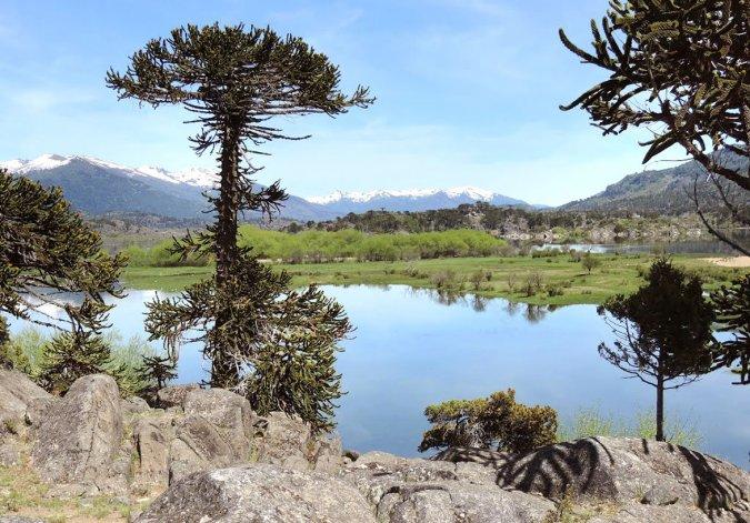 Los característicos pehuenes adornan los paisajes de la maravillosa villa de montaña neuquina.