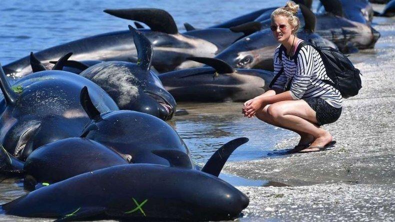 Una voluntaria observa los restos de un grupo de ballenas muertas en Farewell Spit, tras los intentos desesperados por salvarlas.