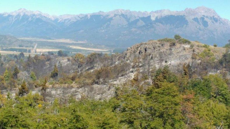 Entre 10 y 20 hectáreas se vieron afectadas hasta el momento.
