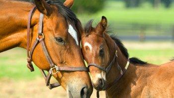 los cambios climaticos multiplicaron las especies de caballos